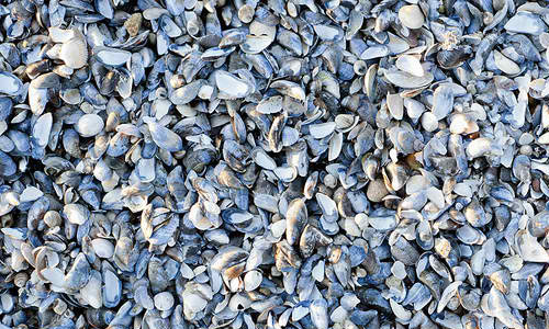 Shellshots texture