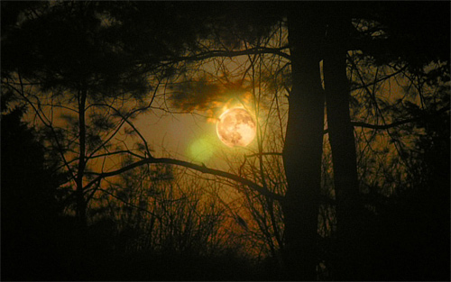 Woods forest cool moon wallpaper