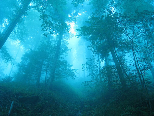 Blue foggy tree forest scary