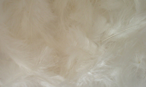 Soft white feather beautiful texture