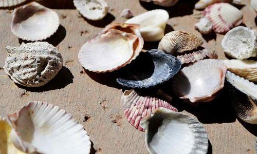 Beach Life texture