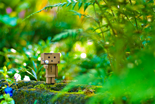 Flower forest danbo photography cute