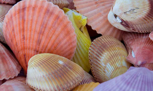 See Shells
