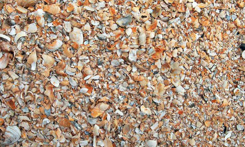 Shells textures 0018