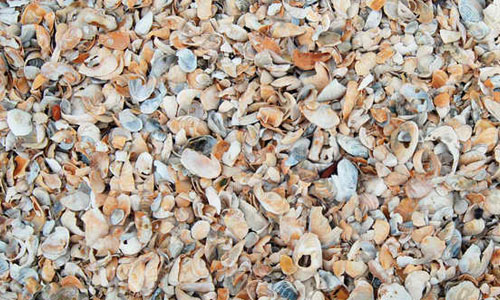 Shells texture 0021
