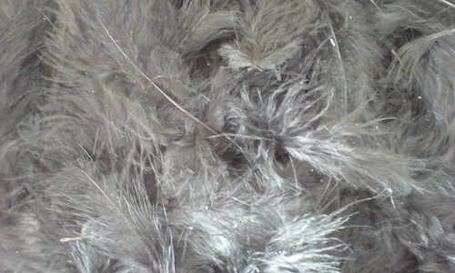 Grey white feather beautiful texture