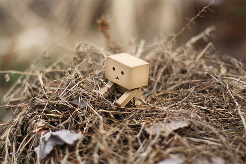 Nest march wallpaper danbo photography cute