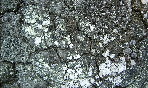 Mold mud texture