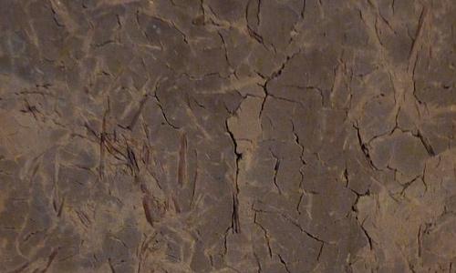 Brown mud texture