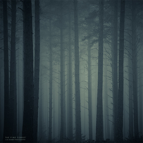 Foggy spooky tree forest scary