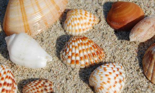 Sea shells 2 textures