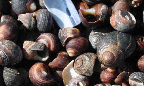 Snail shells textures