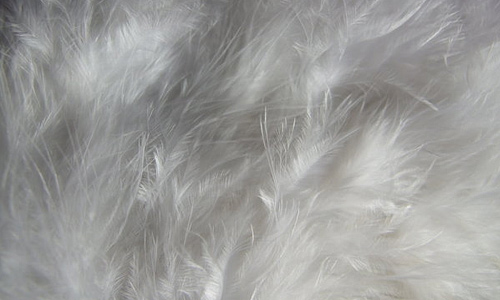 White feather beautiful texture