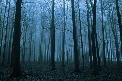 Foggy dead silence tree forest scary