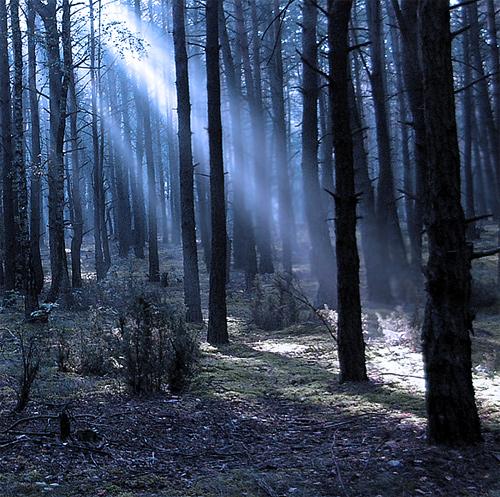 Gloomy dark tree forest scary