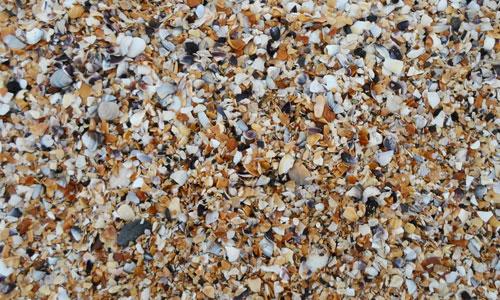 Beach Shell Texture