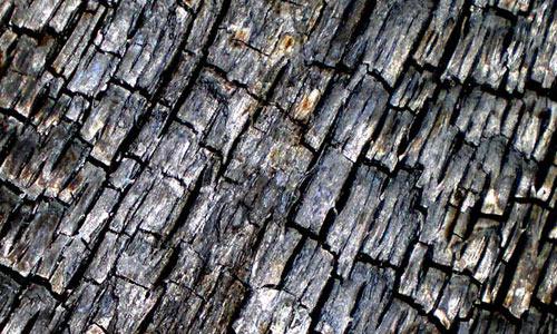 Charred Wood Texture 5