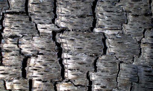 Charred Wood Texture 2