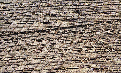 Pattern ring tree stump texture