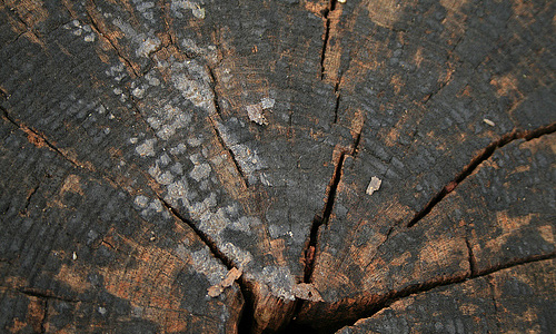 Crack ring tree stump texture