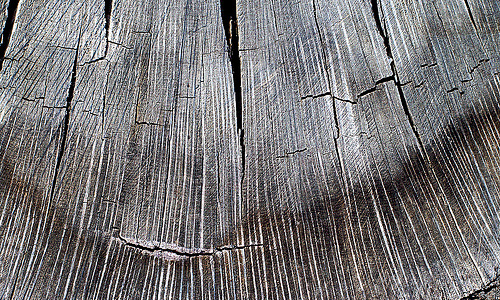 Crack wood tree stump texture