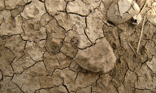 Dirty mud texture