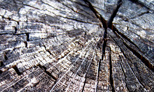Crack ring -wood-tree-stump-texture.jpg