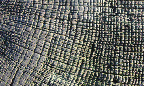 Pattern crossed lines -wood-tree-stump-texture.jpg