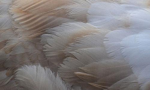 Bird black brown feather beautiful texture