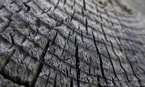 Grey pattern ring tree stump texture