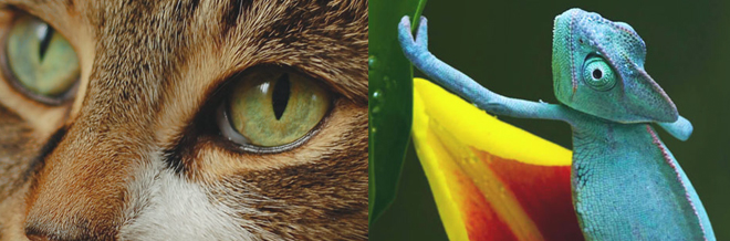 30 Lovable Animal Iphone 5 Wallpapers