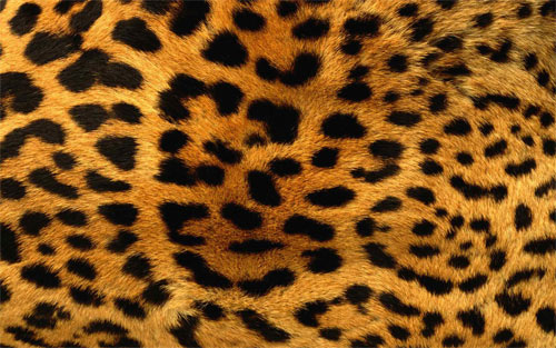 Leopard Fur_89798 wallpaper