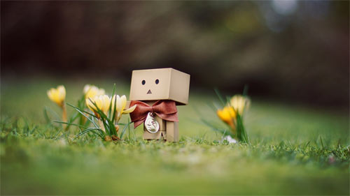 Danbo March between flowers wallpapers
