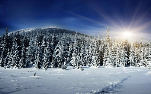 Winter Sunshine HD Wallpaper_105052