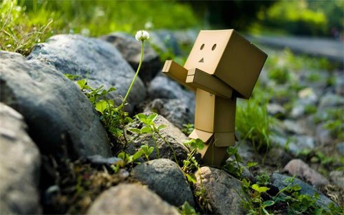 Danbo in Nature wallpaper