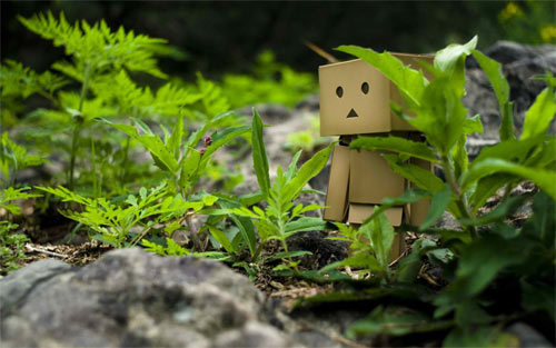 Hiding Danbo wallpaper