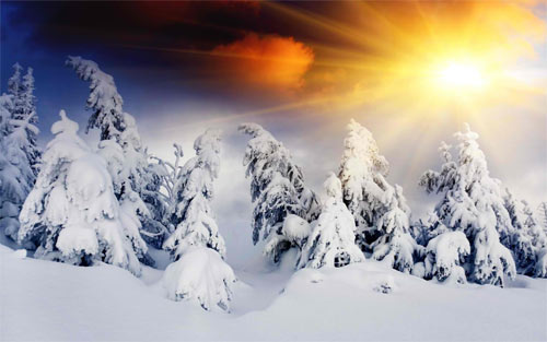 Winter Sun wallpaper