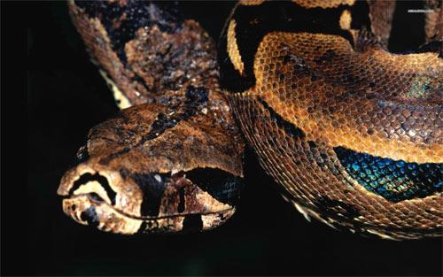 snake wallpaper