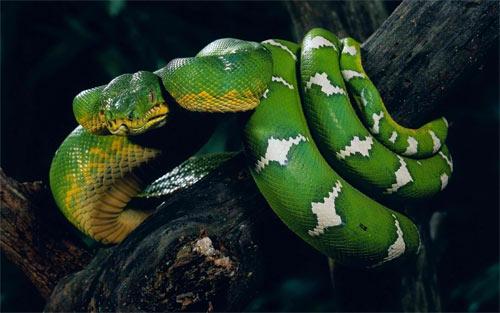 30 Breathtaking Snake Wallpaper For Free Download