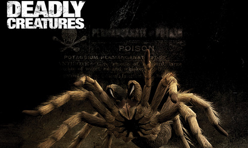 Scary deadly tarantula wallpapers