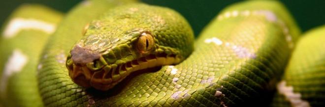 30+ Breathtaking Snake Wallpaper for Free Download