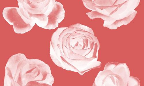 Brushes-Roses