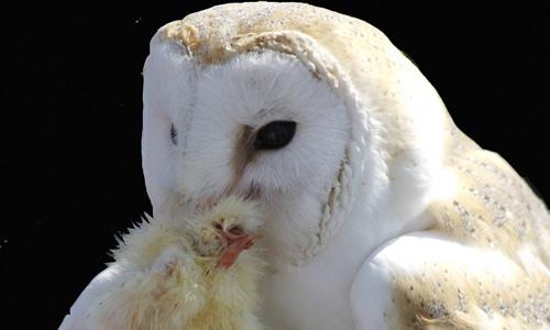 White feeding