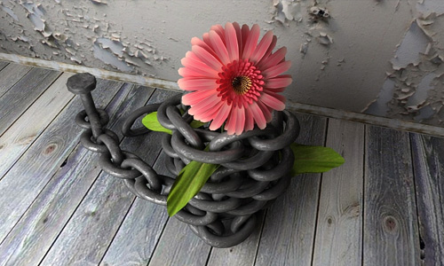 Chained pink daisy flowers hi resolution wallpapers