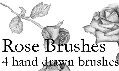 Hand Drawn Rose Brushes