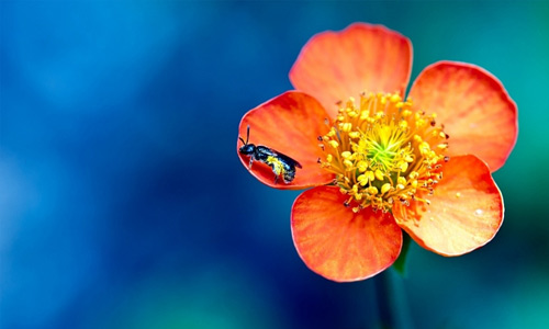 Orange bee flowers hi resolution wallpapers