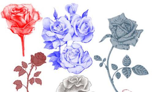 Kool rose brushes