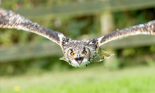 the owlman cometh