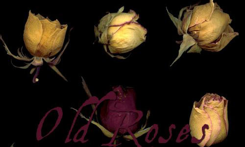 old roses 01-02-03