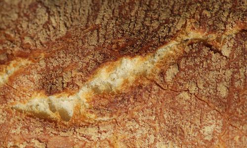 Crust free bread textures download